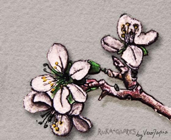 flores de cerezo